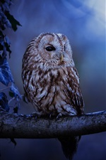 Preview iPhone wallpaper Owl, night, tree, leaves