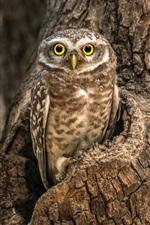 Owl, tree, hole