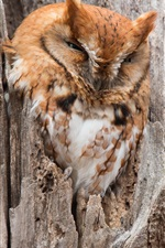 Preview iPhone wallpaper Owl, tree, hollow