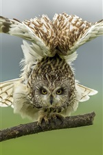 Preview iPhone wallpaper Owl want to flying, wings
