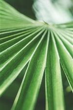iPhone fondos de pantalla Hojas de palma verde