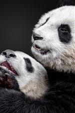 Preview iPhone wallpaper Panda and panda cub, black background
