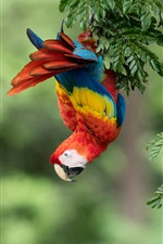 Parrot, macaw, colorful feathers, tree