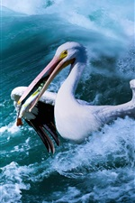 Preview iPhone wallpaper Pelican catch fish, sea, waves
