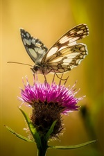 Pink flower, butterfly, backlight