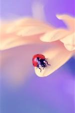 Preview iPhone wallpaper Pink petals, ladybug