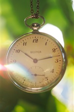 Pocket watch, leaves, glare