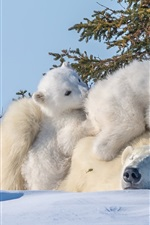 Preview iPhone wallpaper Polar bears family, snow, trees