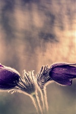 Preview iPhone wallpaper Purple flowers, sleep-grass, bokeh