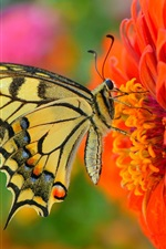 Red flower, butterfly, insect photography