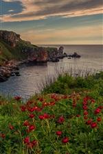 iPhone fondos de pantalla Flores rojas, mar, nubes