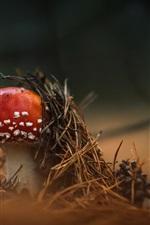 Red mushroom, grass, blurry