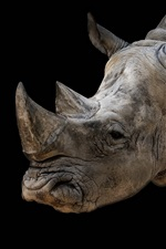 Preview iPhone wallpaper Rhino, black background
