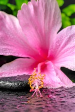 Preview iPhone wallpaper SPA, pink flower and candle, water droplets