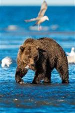 Preview iPhone wallpaper Sea, bears, birds