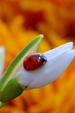 Preview iPhone wallpaper Snowdrop flower and ladybug