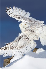 Preview iPhone wallpaper Snowy owl flight, wings, snow