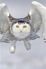 Preview iPhone wallpaper Snowy owl, front view, flight, wings