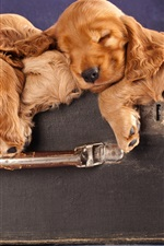 Preview iPhone wallpaper Some brown puppies sleeping in the suitcase