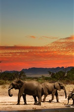 Preview iPhone wallpaper Some elephants, dusk, Africa