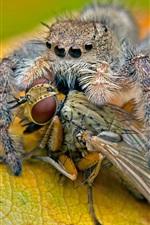미리보기 iPhone 배경 화면 거미의 음식, 곤충