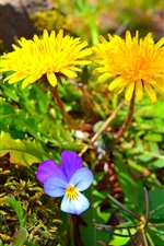 Preview iPhone wallpaper Spring, yellow and purple flowers