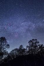 Starry, sky, night, trees