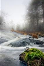 Stream, stones, moss, trees, fog