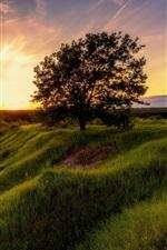 iPhone обои Лето, трава, деревья, солнце, утро