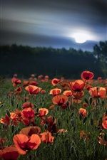 Preview iPhone wallpaper Summer, red poppies, moon, night