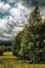 Summer, trees, grass, clouds