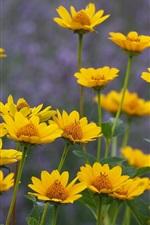 iPhone fondos de pantalla Verano, flores amarillas