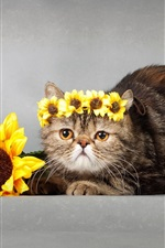 Sunflowers, wreath, cat