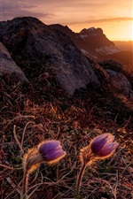 Preview iPhone wallpaper Sunrise, mountains, flowers, sun rays, morning