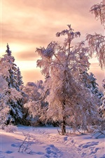Thick snow, trees, winter, dusk