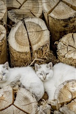 Preview iPhone wallpaper Three white cats, stump