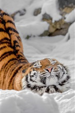 Preview iPhone wallpaper Tiger, pose, snow, winter