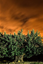 Preview iPhone wallpaper Tree, red sky, night