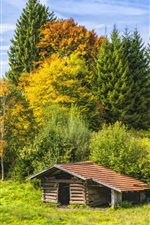 Trees, grass, hut, nature