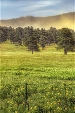 Trees, grass, morning, fog, summer
