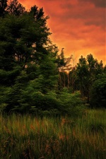 Preview iPhone wallpaper Trees, grass, sunset, art style