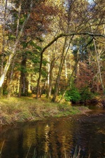 Trees, river, grass, autumn