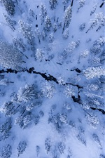Trees, snow, winter, top view