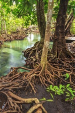 Preview iPhone wallpaper Tropical forest, river, trees