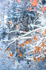 Twigs, yellow leaves, snow, winter