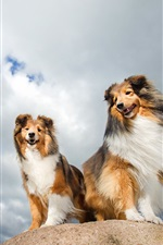 Preview iPhone wallpaper Two dogs, friends, clouds