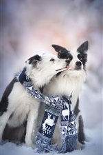 Preview iPhone wallpaper Two dogs, friends, scarf, snow