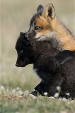 Preview iPhone wallpaper Two fox cubs play games
