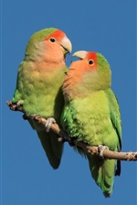 Preview iPhone wallpaper Two green parrots, blue sky