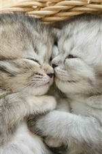 Preview iPhone wallpaper Two kittens sleeping